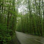 جنگل گیسوم تالش در سفر های نوروزی 97 از دست ندهید
