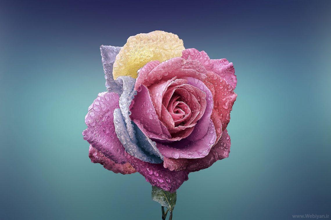 10 عکس گل برای پروفایل