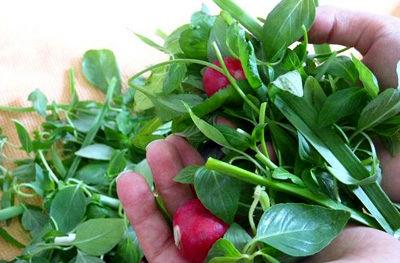خواص سبزی خوردن و ضرروت وجود آن در برنامه غذایی