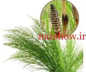 خواص گیاه دم اسب کامل بشناسید