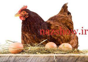 استفاده از تخم مرغ محلی
